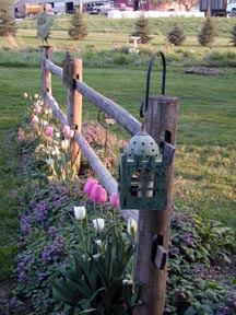 fencetulips